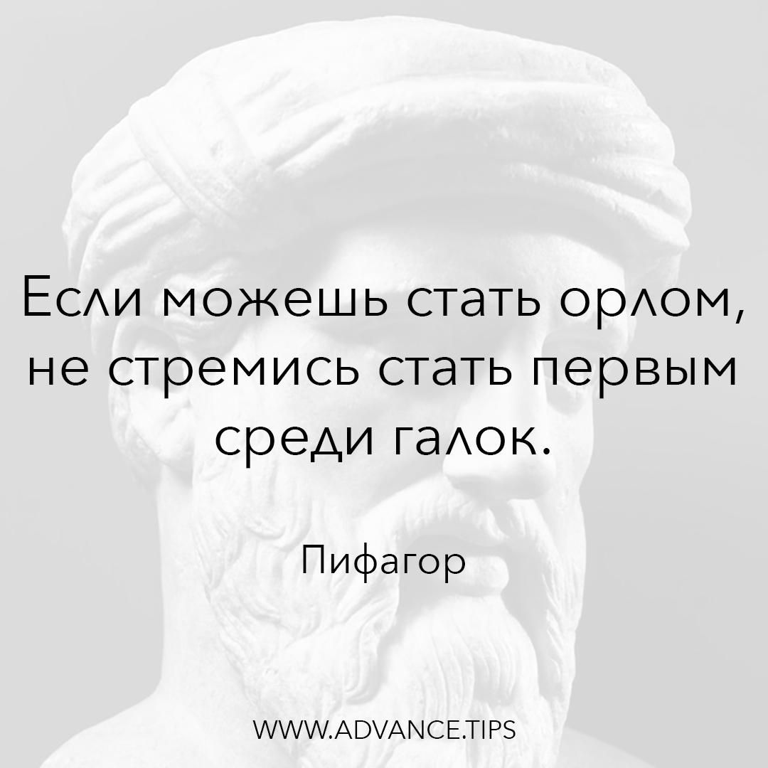 Если можешь стать орлом, не стремись стать первым среди галок. - Пифагор - 10 Мудрых Мыслей.