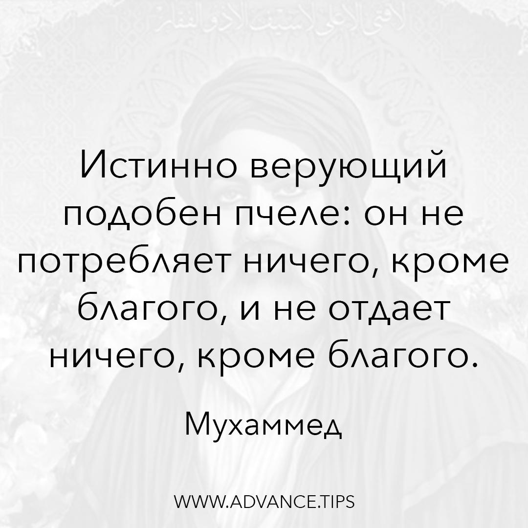 Истинно верующий подобен пчеле: он не потребляет ничего, кроме благого, и не отдает ничего, кроме благого. - Пророк Мухаммед - 10 Мудрых Мыслей.