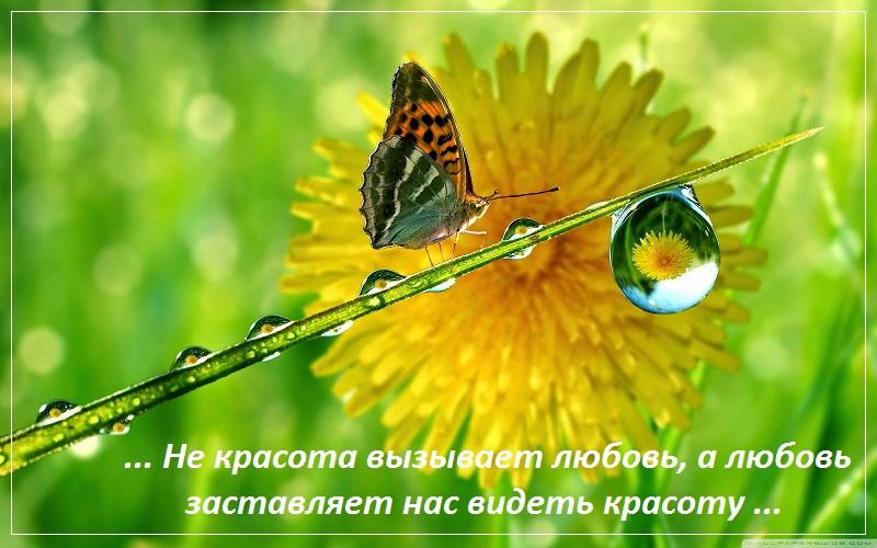 Не красота вызывает любовь, а любовь заставляет нас видеть красоту
