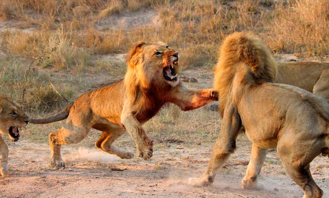 Поучительная Притча про Животных, Уроки Жизни и Смекалку