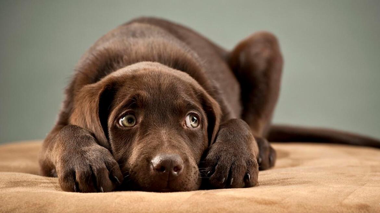 Поучительная Притча про Бедняка, Мудреца и Блюдо из Собаки...